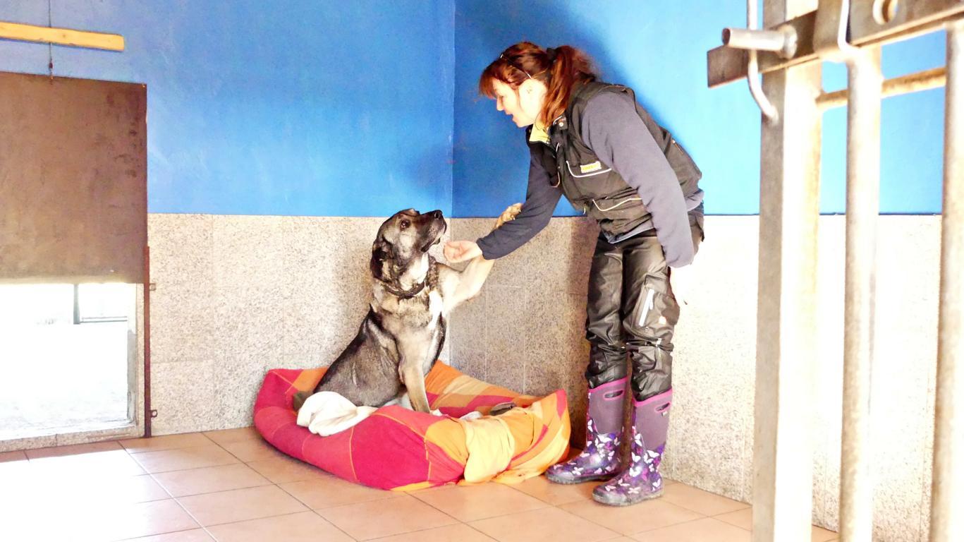 Großzügiges beheiztes Hundezimmer der Hundepension Duwensee in Bosau