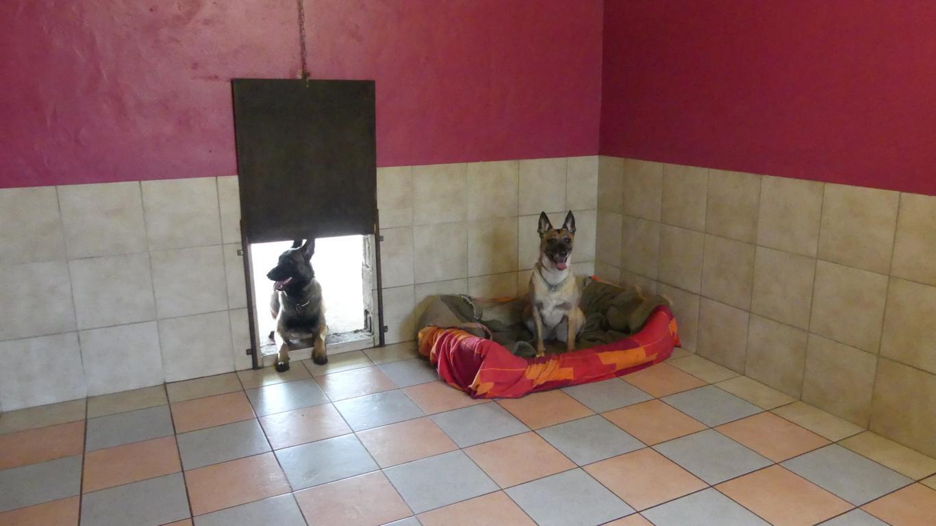 2 Hunde als Gäste in der Hundepension Duwensee